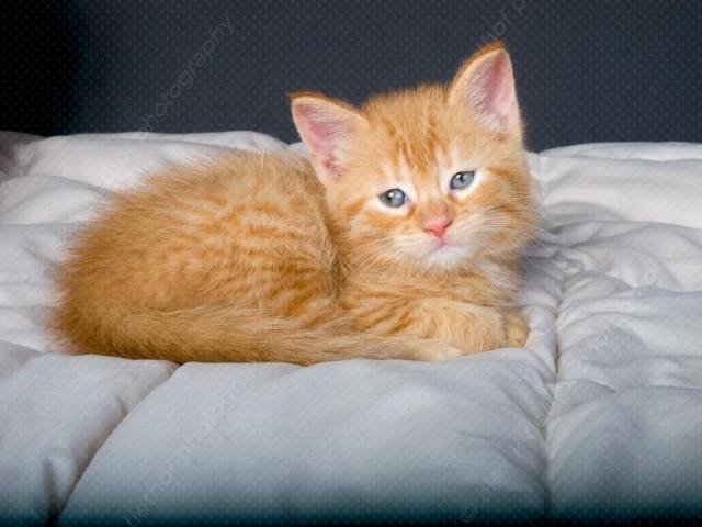 kittens_20080314_31