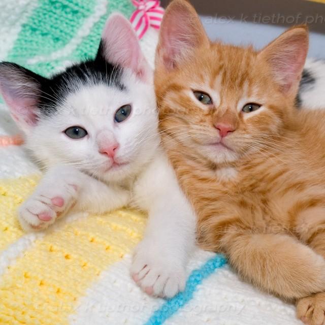kittens_20080401_3-2
