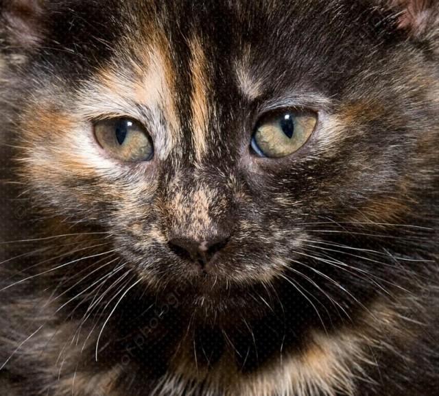 kittens_20080401_48