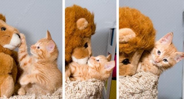 kittens_20080401_62